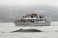 Whale and Dolphin Watching - Ocean Explorer