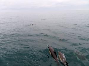 Captain Dave's Dolphin Safari - Dolphins