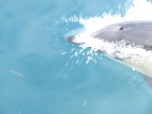 Marine Life Cruise - Dolphin in water