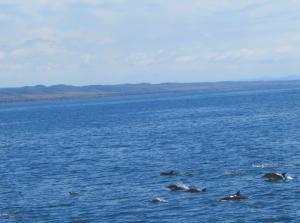 Ocean Institute - Marine Life Cruise - Dolphins