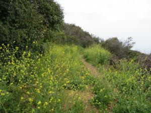 Tuna Canyon Park - Hike - Trail - Wildflowers