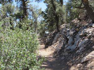 Big Bear Lake - Discovery Center - hikes
