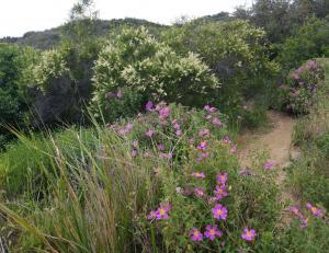 Tuna Canyon Park - Hike - Wildflowers