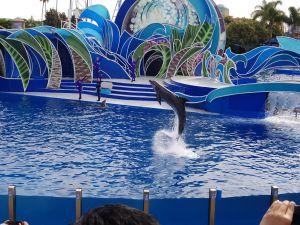 SeaWorld SD - Dolphin Days