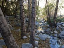 Switzer Falls California - Trees