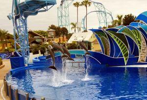 SeaWorld San Diego - Dolphin Days