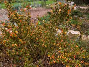 Santa Barbara - Botanic Garden