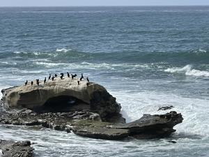San Diego Coastal Bike Ride - Bird Rock