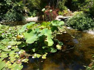 San Diego Botanic Gardens - Pond