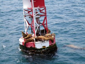 Whale and Dolphin Watching - Sea Lions